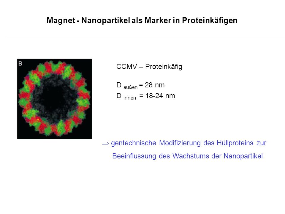 Magnet - Nanopartikel als Marker in Proteinkäfigen CCMV – Proteinkäfig D außen = 28 nm D innen = 18-24 nm gentechnische Modifizierung des Hüllproteins