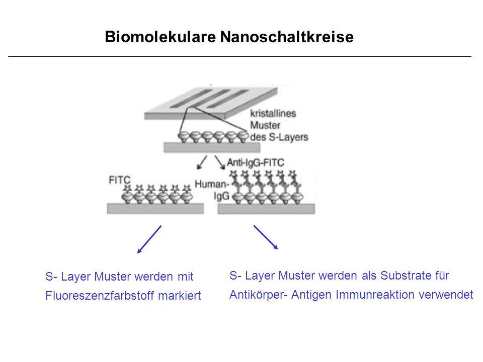 Biomolekulare Nanoschaltkreise S- Layer Muster werden mit Fluoreszenzfarbstoff markiert S- Layer Muster werden als Substrate für Antikörper- Antigen I