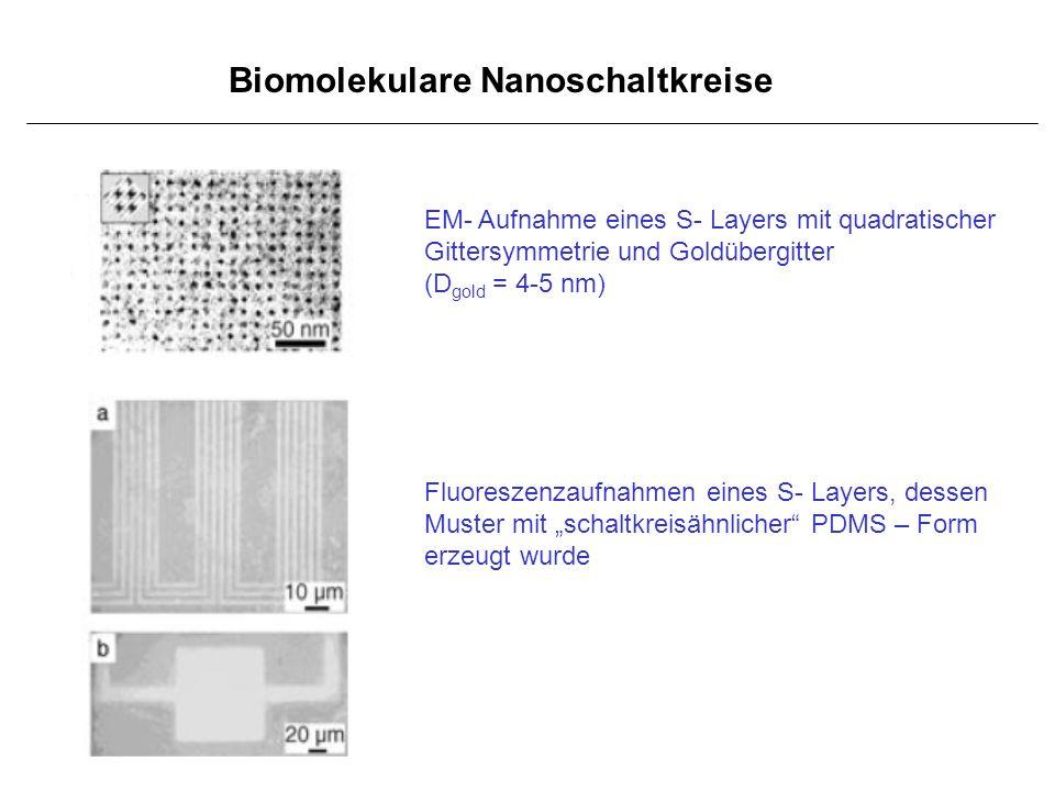 Biomolekulare Nanoschaltkreise EM- Aufnahme eines S- Layers mit quadratischer Gittersymmetrie und Goldübergitter (D gold = 4-5 nm) Fluoreszenzaufnahme