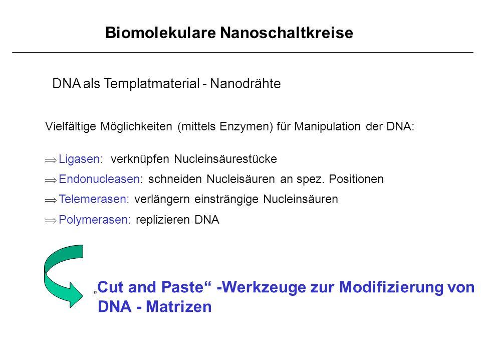 Biomolekulare Nanoschaltkreise DNA als Templatmaterial - Nanodrähte Vielfältige Möglichkeiten (mittels Enzymen) für Manipulation der DNA: Ligasen: ver