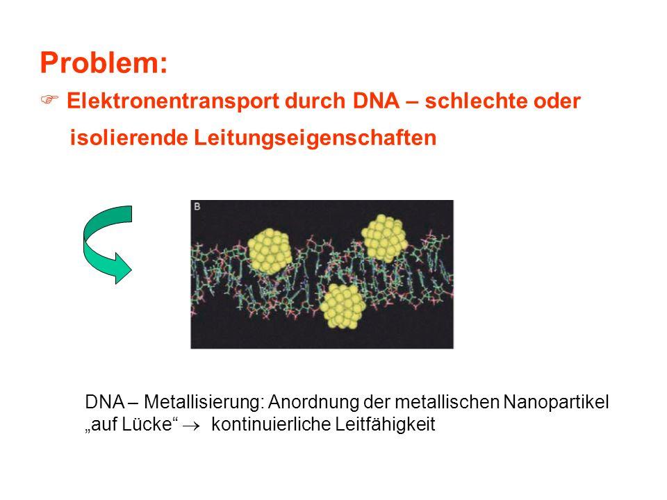 Problem: Elektronentransport durch DNA – schlechte oder isolierende Leitungseigenschaften DNA – Metallisierung: Anordnung der metallischen Nanopartike