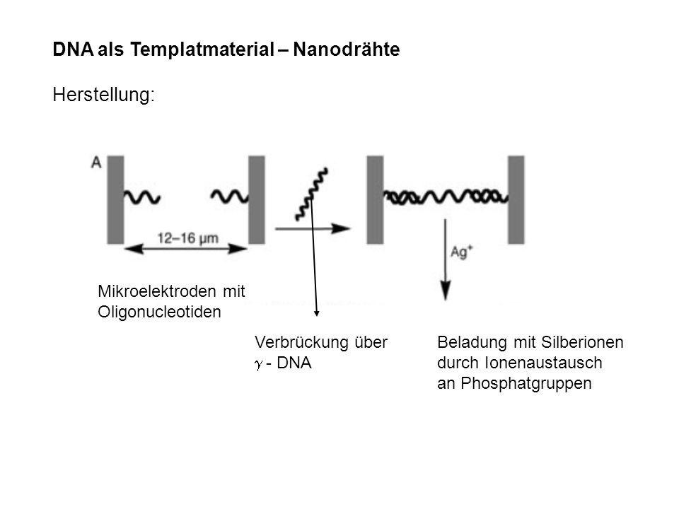 DNA als Templatmaterial – Nanodrähte Herstellung: Mikroelektroden mit Oligonucleotiden Verbrückung über - DNA Beladung mit Silberionen durch Ionenaust