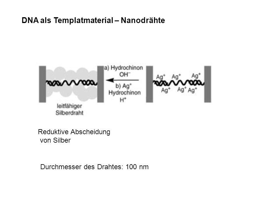 DNA als Templatmaterial – Nanodrähte Reduktive Abscheidung von Silber Durchmesser des Drahtes: 100 nm