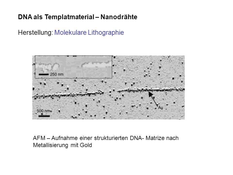 DNA als Templatmaterial – Nanodrähte Herstellung: Molekulare Lithographie AFM – Aufnahme einer strukturierten DNA- Matrize nach Metallisierung mit Gol
