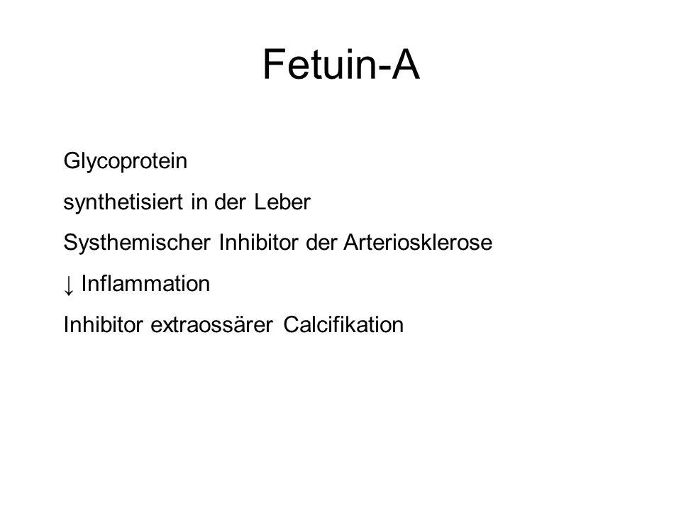Fetuin-A Glycoprotein synthetisiert in der Leber Systhemischer Inhibitor der Arteriosklerose Inflammation Inhibitor extraossärer Calcifikation