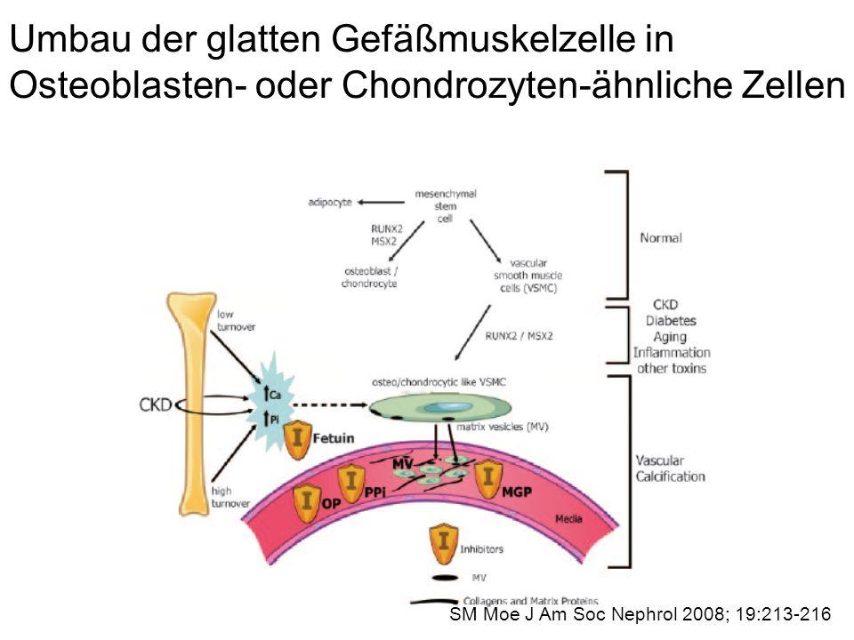 Umbau der glatten Gefäßmuskelzelle in Osteoblasten- oder Chondrozyten-ähnliche Zellen