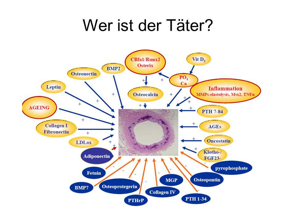 Folgende Täter werden am 14.6.2013 hier diskutiert: Promotoren FGF-23 Inflammation Phosphat Inhibitoren Fetuin-A
