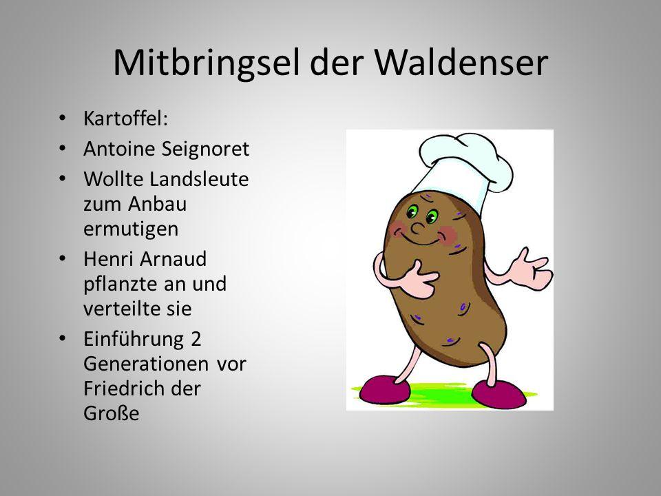 Mitbringsel der Waldenser Kartoffel: Antoine Seignoret Wollte Landsleute zum Anbau ermutigen Henri Arnaud pflanzte an und verteilte sie Einführung 2 G