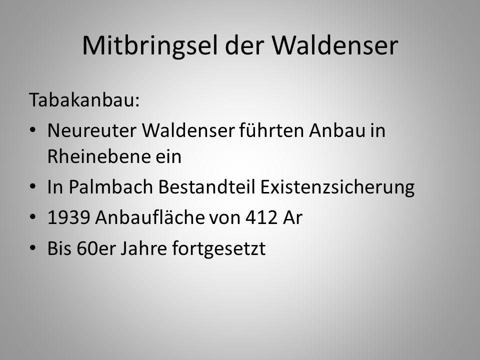 Mitbringsel der Waldenser Tabakanbau: Neureuter Waldenser führten Anbau in Rheinebene ein In Palmbach Bestandteil Existenzsicherung 1939 Anbaufläche v