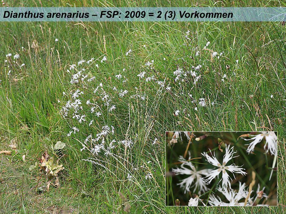 Dianthus arenarius – FSP: 2009 = 2 (3) Vorkommen