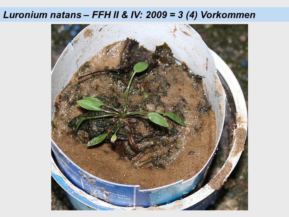 Luronium natans – FFH II & IV: 2009 = 3 (4) Vorkommen