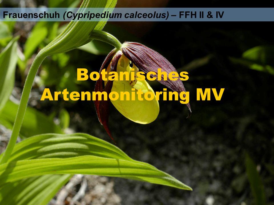 Frauenschuh (Cypripedium calceolus) – FFH II & IV Botanisches Artenmonitoring MV