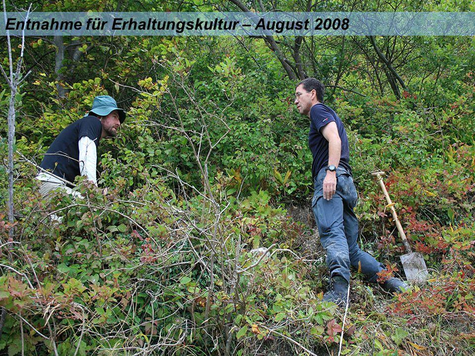 Entnahme für Erhaltungskultur – August 2008