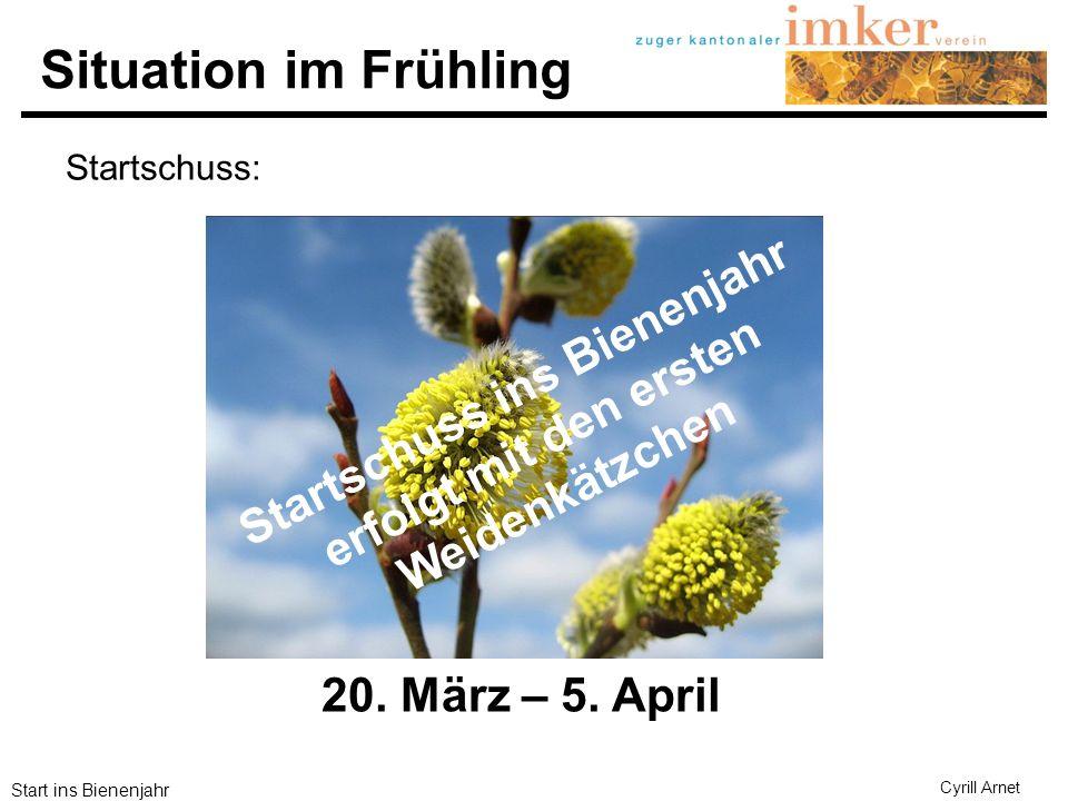 Start ins Bienenjahr Cyrill Arnet Situation im Frühling Startschuss ins Bienenjahr erfolgt mit den ersten Weidenkätzchen 20. März – 5. April Startschu