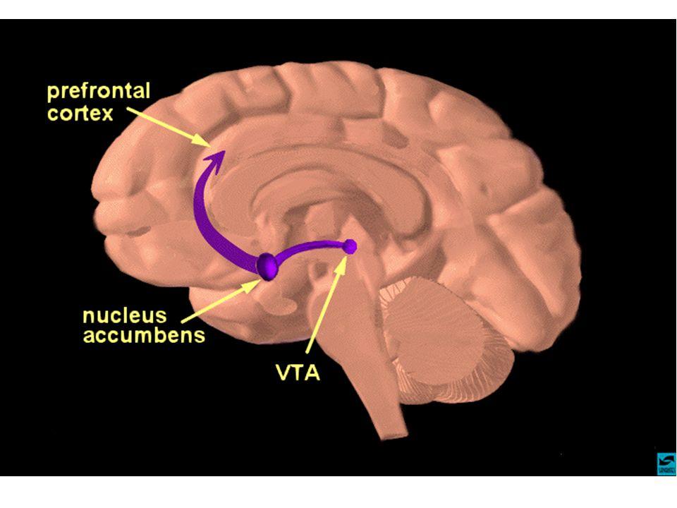 Brain reward (Dopaminhypothese)