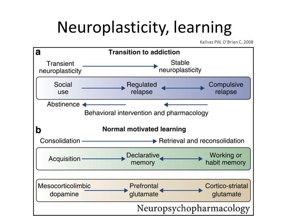 Neuroplasticity, learning Kalivas PW, OBrien C, 2008