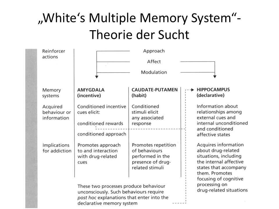 Whites Multiple Memory System- Theorie der Sucht