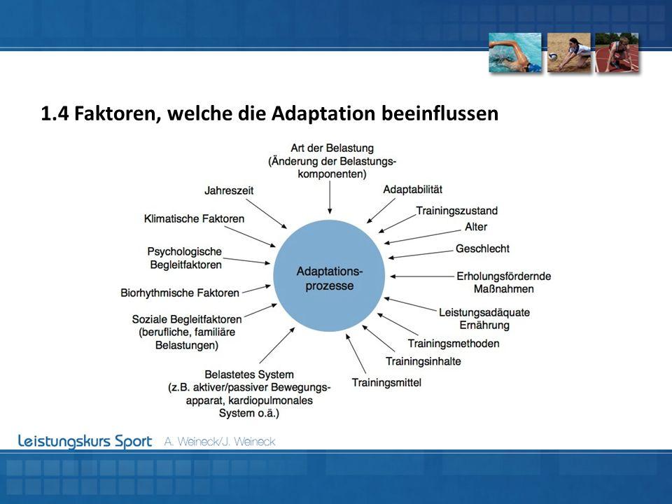 1.4 Faktoren, welche die Adaptation beeinflussen