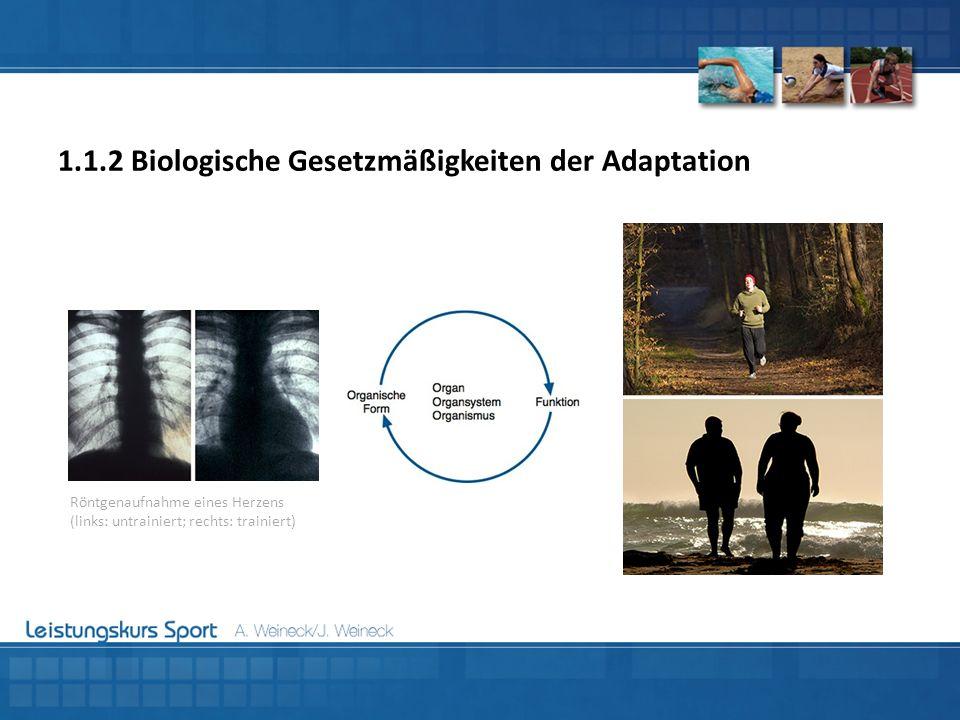 Röntgenaufnahme eines Herzens (links: untrainiert; rechts: trainiert)