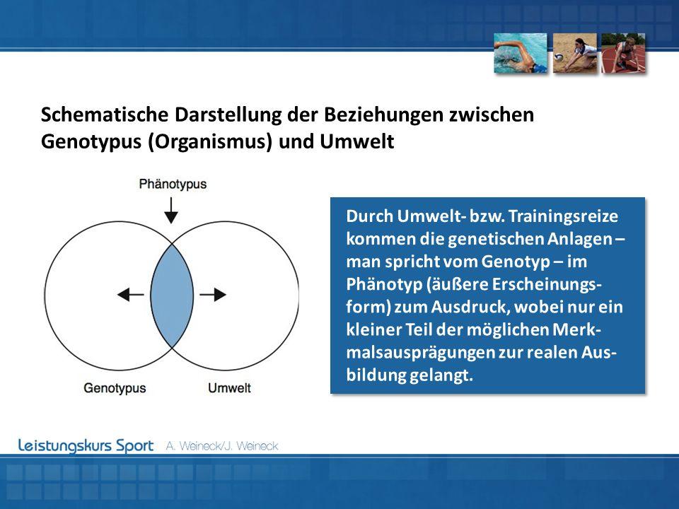 Schematische Darstellung der Beziehungen zwischen Genotypus (Organismus) und Umwelt