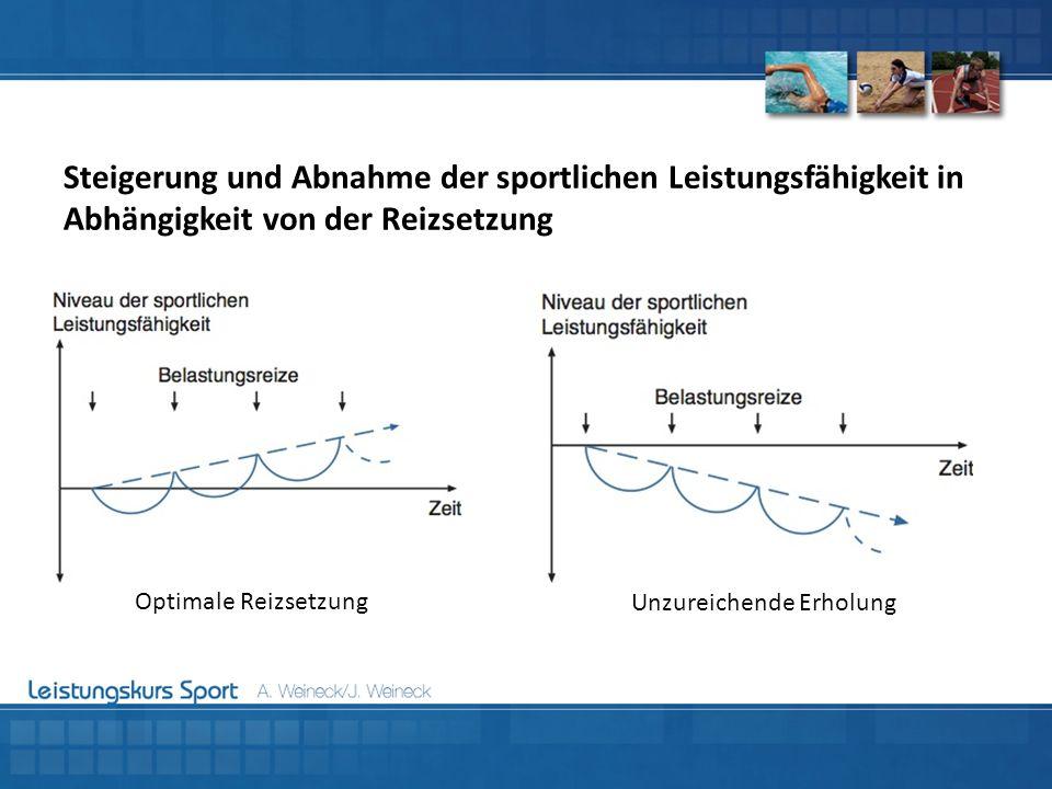 Steigerung und Abnahme der sportlichen Leistungsfähigkeit in Abhängigkeit von der Reizsetzung Optimale Reizsetzung Unzureichende Erholung