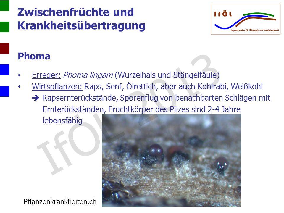 Zwischenfrüchte und Krankheitsübertragung Phoma Erreger: Phoma lingam (Wurzelhals und Stängelfäule) Wirtspflanzen: Raps, Senf, Ölrettich, aber auch Ko