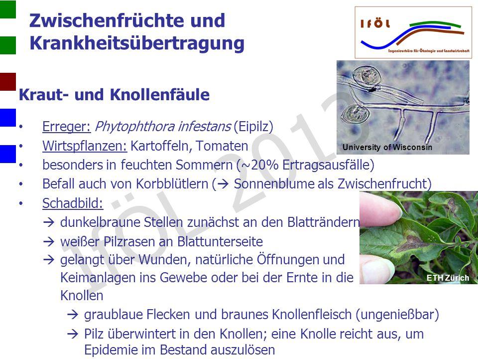 Zwischenfrüchte und Krankheitsübertragung Kraut- und Knollenfäule Erreger: Phytophthora infestans (Eipilz) Wirtspflanzen: Kartoffeln, Tomaten besonder