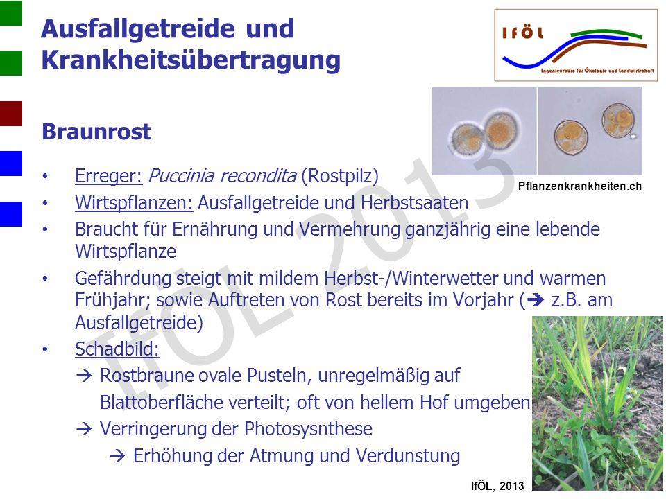 Ausfallgetreide und Krankheitsübertragung Braunrost Erreger: Puccinia recondita (Rostpilz) Wirtspflanzen: Ausfallgetreide und Herbstsaaten Braucht für