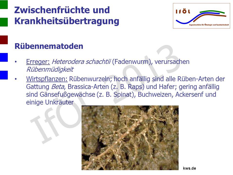 Zwischenfrüchte und Krankheitsübertragung Rübennematoden Erreger: Heterodera schachtii (Fadenwurm), verursachen Rübenmüdigkeit Wirtspflanzen: Rübenwur