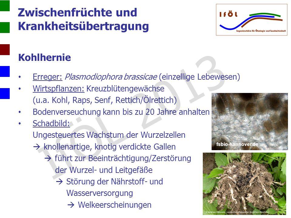 Zwischenfrüchte und Krankheitsübertragung Kohlhernie Erreger: Plasmodiophora brassicae (einzellige Lebewesen) Wirtspflanzen: Kreuzblütengewächse (u.a.