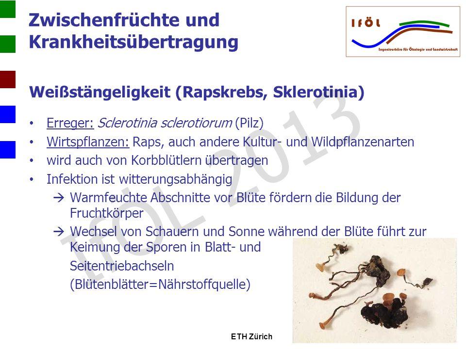 Zwischenfrüchte und Krankheitsübertragung Weißstängeligkeit (Rapskrebs, Sklerotinia) Schadbild: Stängel bleicht aus, meist ausgehend von einer Verzweigung oder einer Blattansatzstelle Rinde löst sich ab Pflanzenteile über der Befallsstelle sterben ab Stängel knickt ab im Stängel weiße Mycelverdichtungen, die später zu schwarzen, unregelmäßig geformten Dauerkörpern (Sklerotien) übergehen gelangen beim Drusch wieder auf den Boden mehrere Jahre infektionsfähig BASF Österreich IfÖL 2013