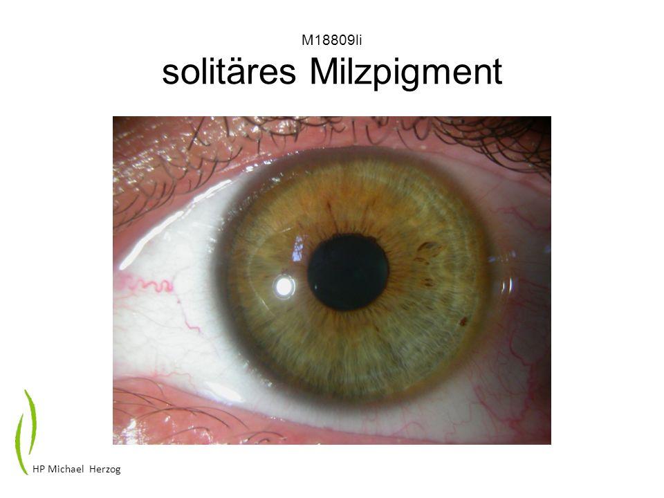 P31809li Allergiegefäße pigmentierte Krausenzone HP Michael Herzog