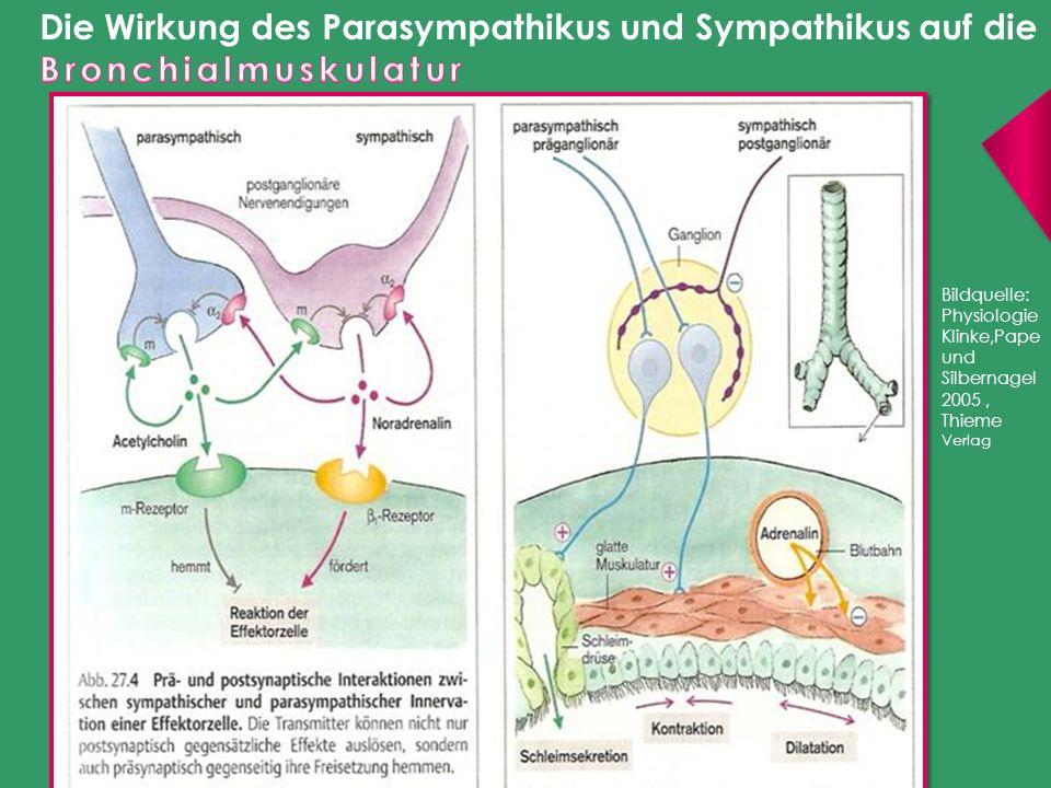 Bildquelle: Physiologie Klinke,Pape und Silbernagel 2005, Thieme Verlag