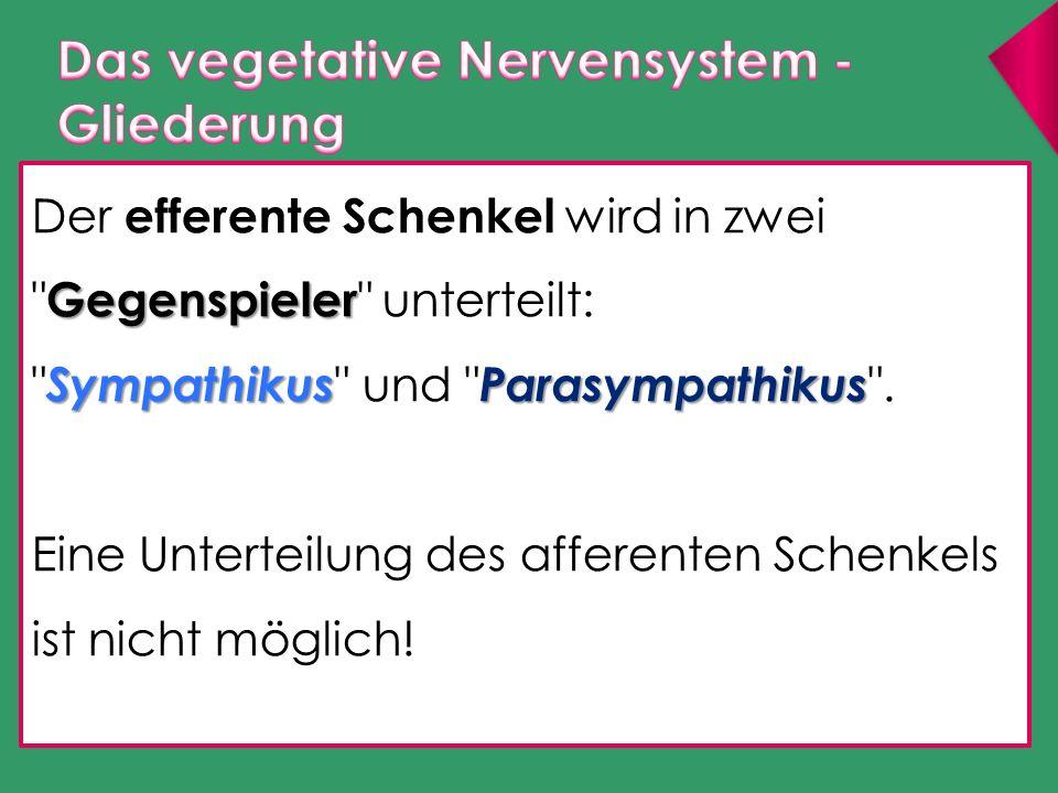 Sympathikus: aktivierendes System ergotrop ( leistungssteigernd ) katabol ( Energie verbrauchend ) Parasympathikus: dämpfendes System trophotrop ( aufbauend ) anabol ( Energie speichernd )