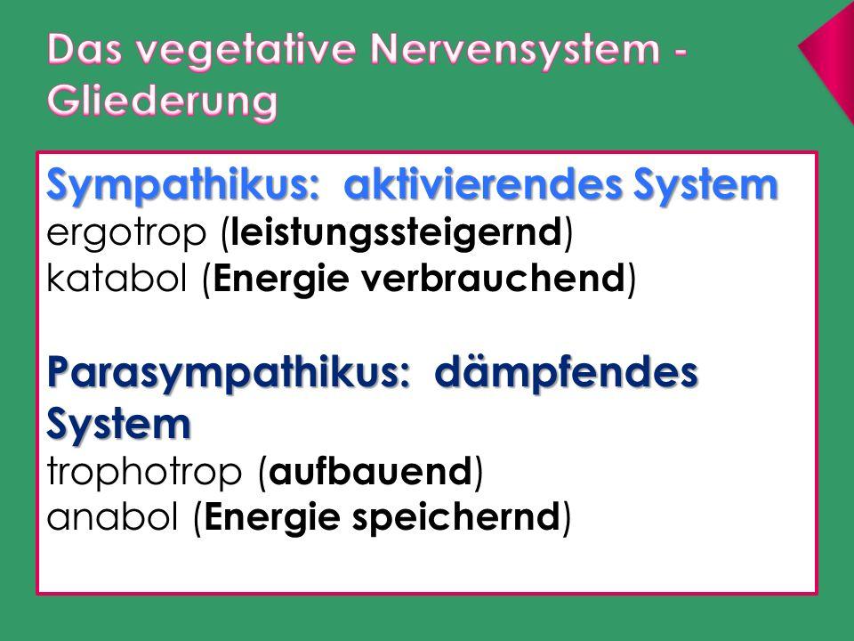 Sympathikus: aktivierendes System ergotrop ( leistungssteigernd ) katabol ( Energie verbrauchend ) Parasympathikus: dämpfendes System trophotrop ( auf