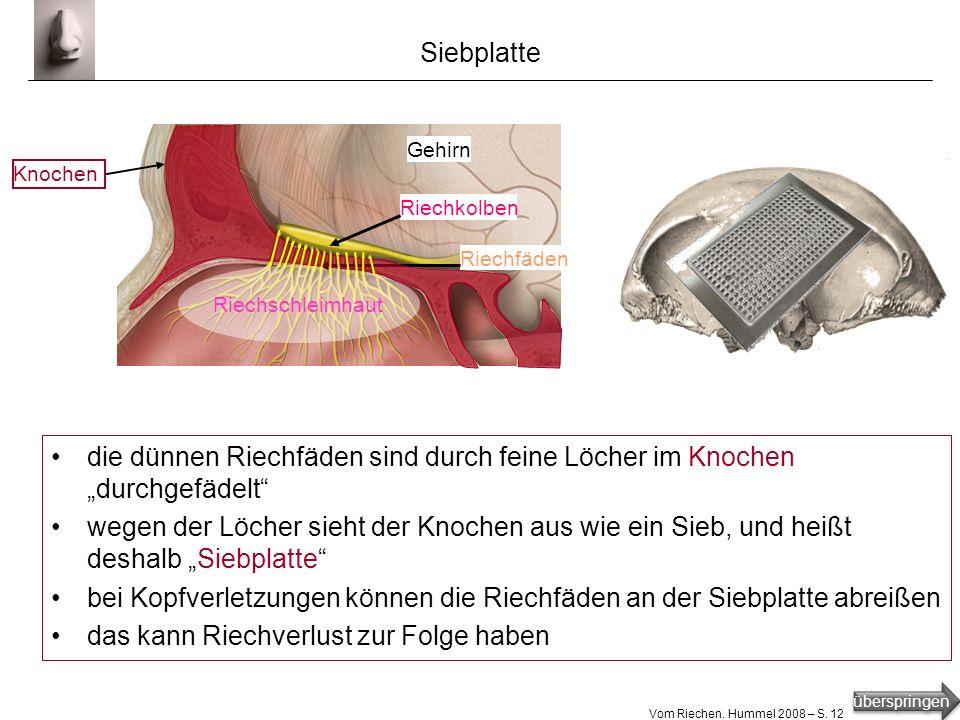 überspringen Vom Riechen. Hummel 2008 – S. 11 Rezeptoren Rezeptor [1] : Empfängerstation der Rezeptorzelle [1] gesendete Signale: Sinnesreize (Gerüche