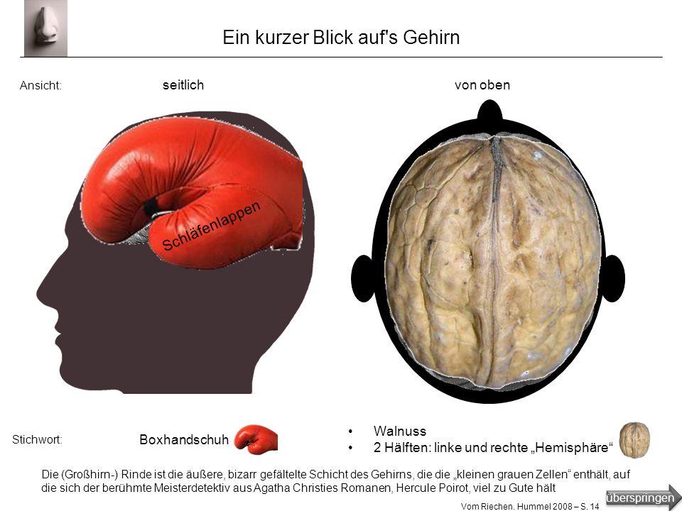 überspringen Vom Riechen. Hummel 2008 – S. 13 Riechkolben: primäres Riechzentrum im Gehirn im Riechkolben liegen Glomeruli (=Knäuelchen) in den Glomer