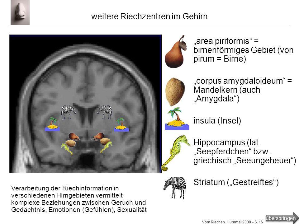 überspringen Vom Riechen. Hummel 2008 – S. 15 Gehirn-Tomografie Blick ins Gehirn mittels MRT = = Magnet-Resonanz-Tomografie Tomografie = Schnittbild a