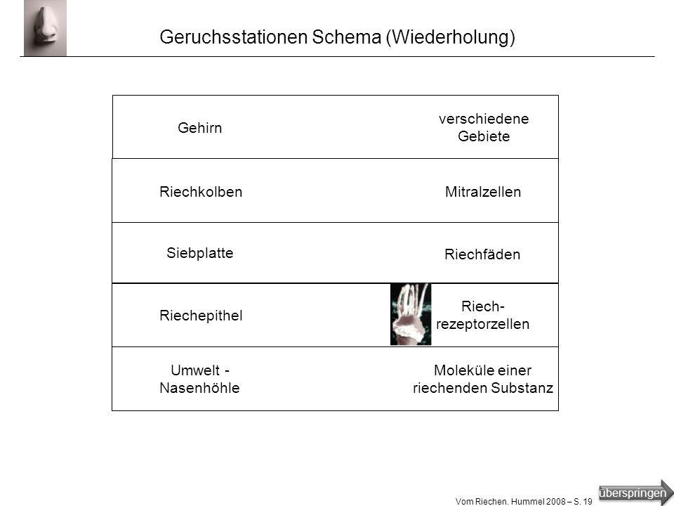 überspringen Vom Riechen. Hummel 2008 – S. 18 Geruchskodierung ?
