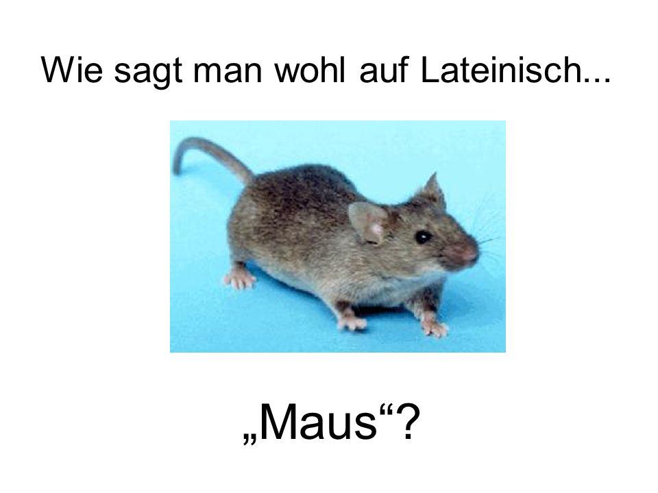 Wie sagt man wohl auf Lateinisch... Maus?