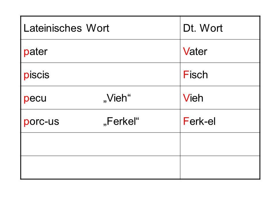 Lateinisches WortDt. Wort paterVater piscisFisch pecuVieh porc-usFerkelFerk-el