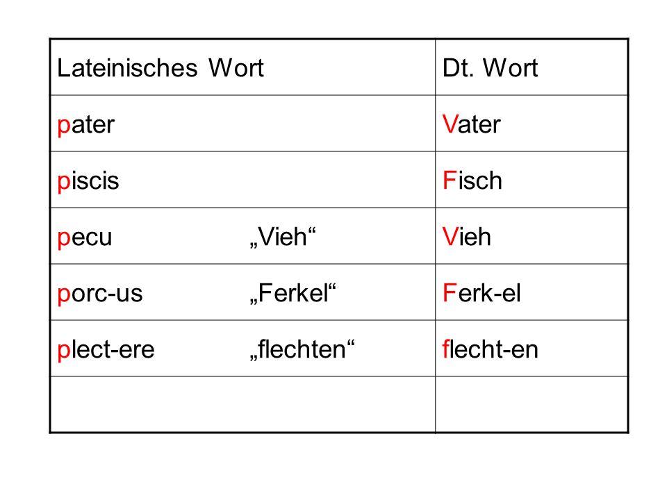 Lateinisches WortDt. Wort paterVater piscisFisch pecuVieh porc-usFerkelFerk-el plect-ereflechtenflecht-en