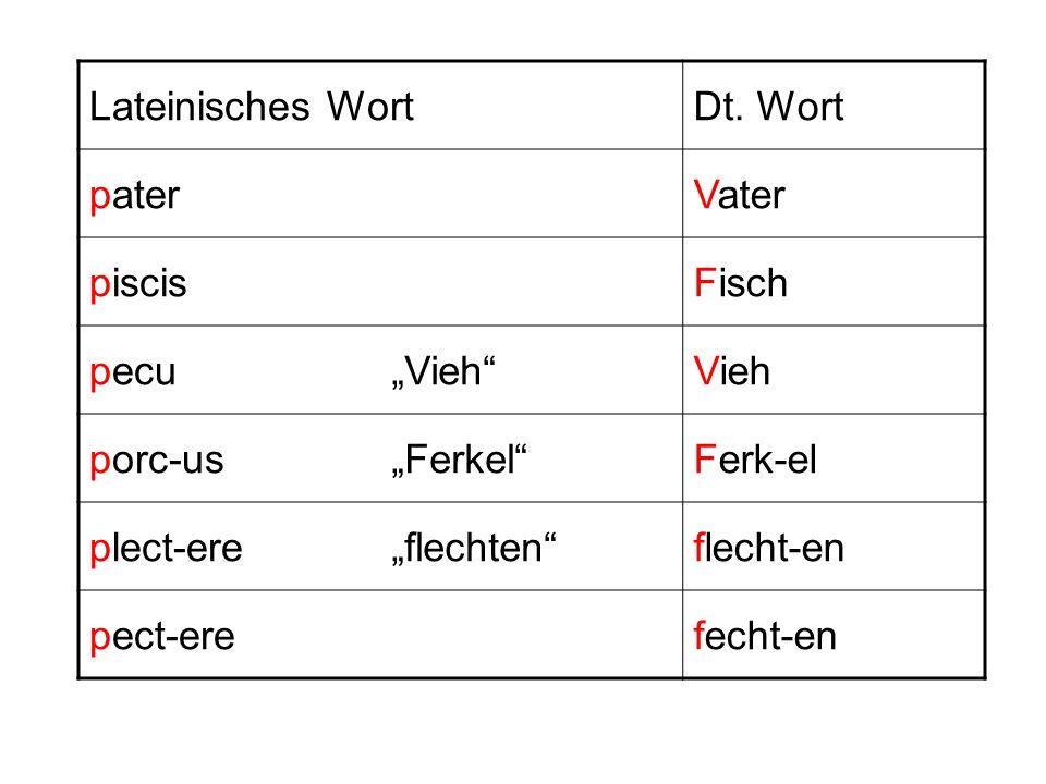 Lateinisches WortDt. Wort paterVater piscisFisch pecuVieh porc-usFerkelFerk-el plect-ereflechtenflecht-en pect-erefecht-en
