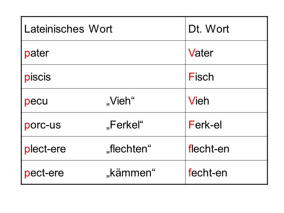 Lateinisches WortDt. Wort paterVater piscisFisch pecuVieh porc-usFerkelFerk-el plect-ereflechtenflecht-en pect-erekämmenfecht-en