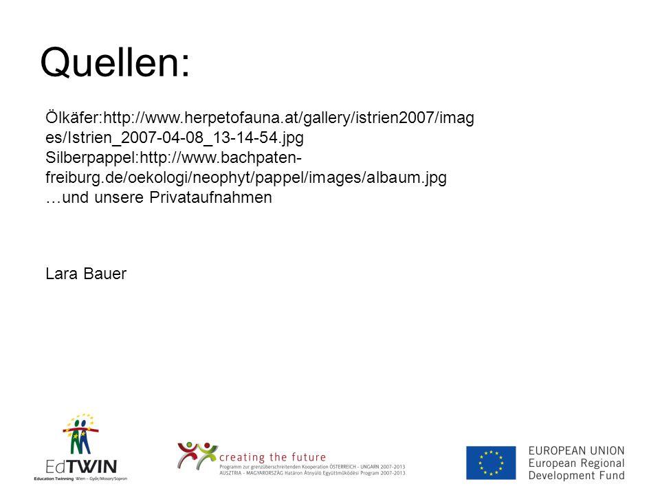 Quellen: Ölkäfer:http://www.herpetofauna.at/gallery/istrien2007/imag es/Istrien_2007-04-08_13-14-54.jpg Silberpappel:http://www.bachpaten- freiburg.de/oekologi/neophyt/pappel/images/albaum.jpg …und unsere Privataufnahmen Lara Bauer