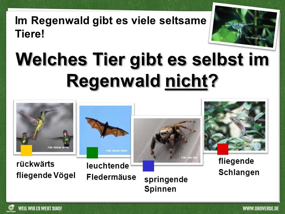 Wie groß werden die größten Vogelspinnen der Welt? So groß wie eine Hand. So groß wie ein DIN A5-Blatt. So groß wie ein DIN A4-Blatt. Foto: Konrad Wot
