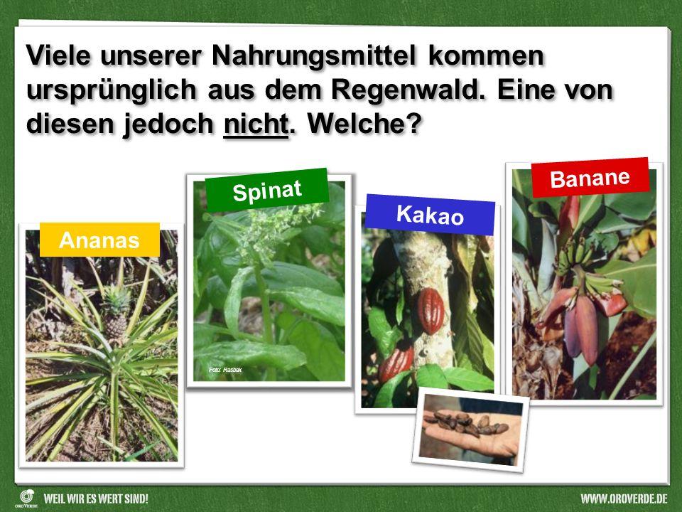 Welches Tier gibt es selbst im Regenwald nicht? Im Regenwald gibt es viele seltsame Tiere! fliegende Schlangen leuchtende Fledermäuse Foto: Konrad Wot