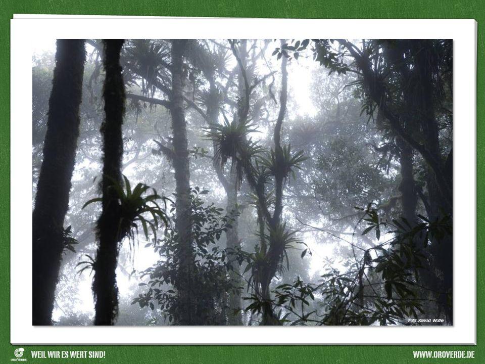 Deutscher Wald Auf einer Fläche, die so groß ist wie ein Fußballfeld, stehen im Regenwald bis zu 500 unterschiedliche Baumarten und im deutschen Wald weniger als 20 Baumarten.