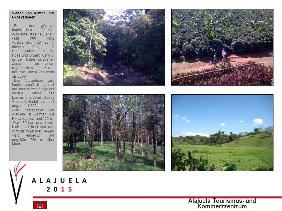 Vielfalt von Klimas und Ökosystemen - Einer der grössten touristischen Vorteile Alajuelas ist seine Vielfalt - Mit 380 km2 Ausbreitung, gibt es in diesem Kanton 2 Nationalparks: Volcán Poás und Braulio Carrillo, in den höher gelegenen Zonen mit einem regenreichen kalten Klima, und mit Höhen von mehr als 2000 m.