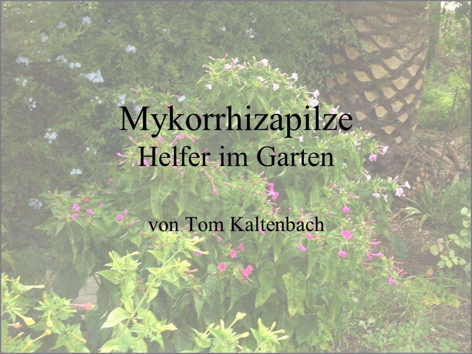 Mykorrhizapilze Helfer im Garten von Tom Kaltenbach